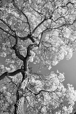 Black_white Photograph - Black And White Summer Tree by Ruthann Carlson