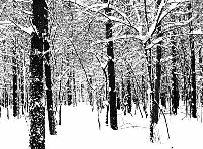 Black And White Winter Forest Print by Debbie Oppermann