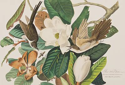Cuckoo Drawing - Black Billed Cuckoo by John James Audubon