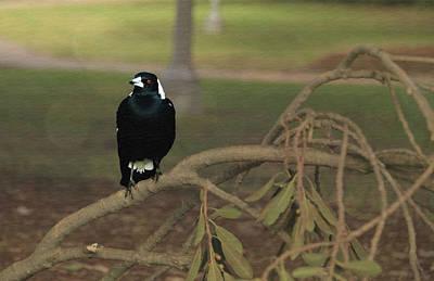 Bird And Worm Photograph - Black Bird by Rezwana Muktadir