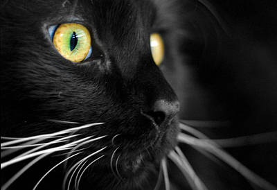 Cats Photograph - Black Cat 2 by Craig Incardone