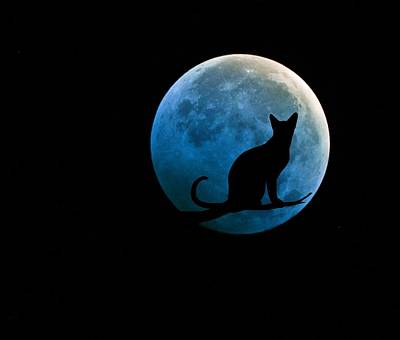 Black Cat And Blue Full Moon Print by Marianna Mills