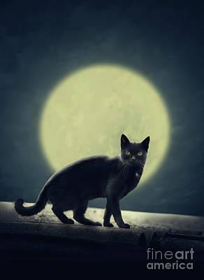 Halloween Card Digital Art - Black Cat And Full Moon by Jelena Jovanovic