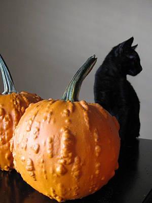 Black Cat Silhouette  Print by Lindie Racz