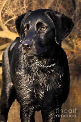 Pup Digital Art - Black Labrador Retriever Dog by Cathy  Beharriell