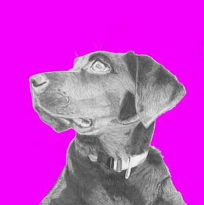 Black Labrador Retriever In Pink Headshot Print by David Smith