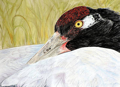 Black-necked Crane Portrait Print by Vicky Lilla