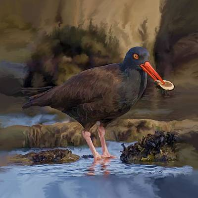 Black Oyster Catcher Original by David Wagner