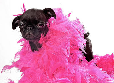 Black Pug Puppy With Pink Boa Print by Susan Schmitz