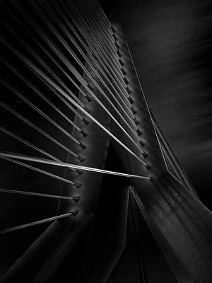 Black Swan Print by Arnd Gottschalk