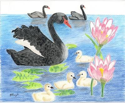 Waterlily Drawing - Black Swan by Joy Lloyd