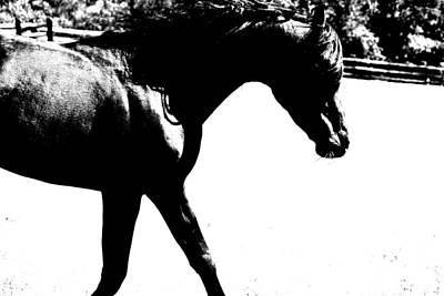 Horse Photograph - Black Trot by Emily Stauring
