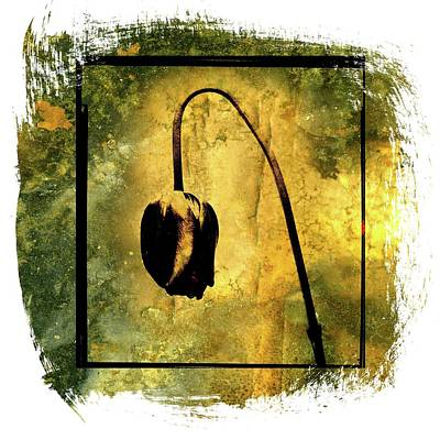 Figure Drawing Photograph - Black Tulip by Bernard Jaubert