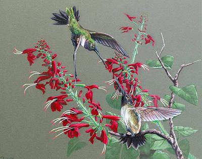 Blackeared Hummingbirds Original by Virginia Simmons