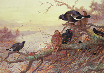 Blackgame In Winter  Print by Archibald Thorburn