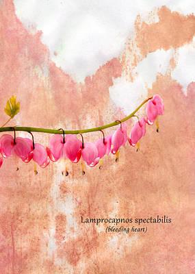 Pink Photograph - Bleeding Heart by Mark Rogan