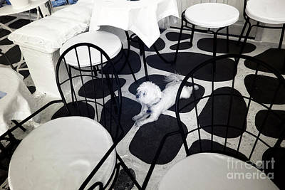Dog Pics Photograph - Blending In At Mykonos Infrared by John Rizzuto