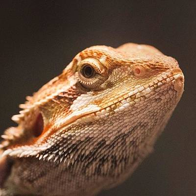 Dragon Photograph - Blix Is Dubious by Dave Edens