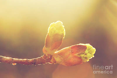 Hope Photograph - Blooming Spring Bud In Morning Light by Michal Bednarek