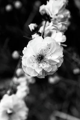 Floral Photograph - Blossom 2 by Xenia Headley