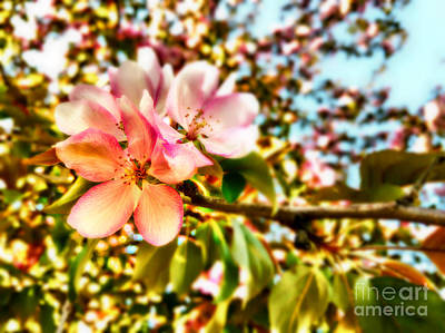Flowers Photograph - Blossom by Anne Roy