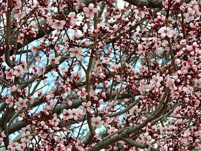 Plumb Painting - Blossom Made It Thru The Wind by Phyllis Kaltenbach