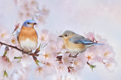 Blossoms And Bluebirds Print by Lori Deiter