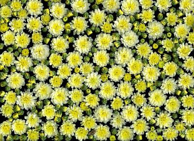 Blossoms Original by Christian Slanec