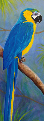 Blue And Gold Macaw Painting - Blue And Gold Macaw by Anne Marie Brown