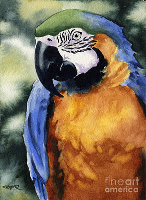 Blue And Gold Macaw Print by David Rogers
