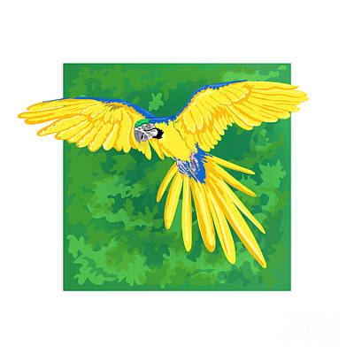 Blue And Gold Macaw Print by HD Connelly