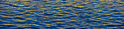 Blue And Gold Original by Steve Gadomski