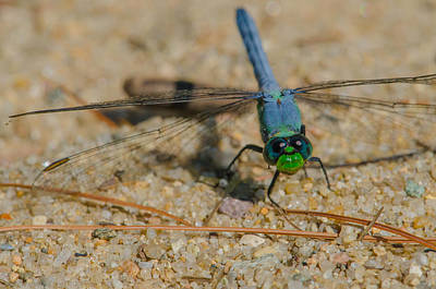 Bugs Photograph - Blue And Green Dragonfly by Linda  Howes
