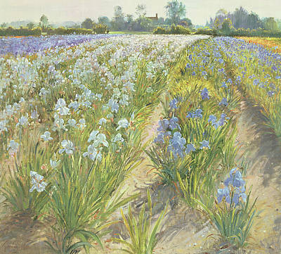 Ground Painting - Blue And White Irises by Timothy Easton