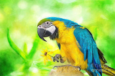 Macaw Digital Art - Blue And Yellow Macaw by Lois Bryan