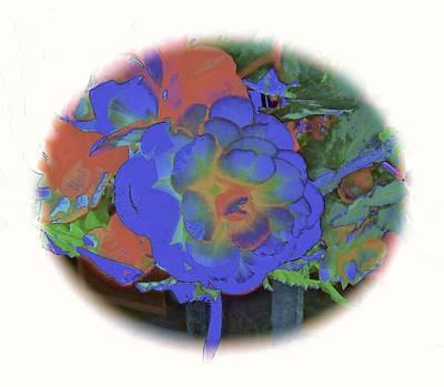 Blue Begonia Photograph - Blue Begonia by Elizabeth Tillar