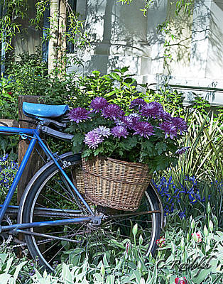 Blue Bike Print by Cheri Randolph