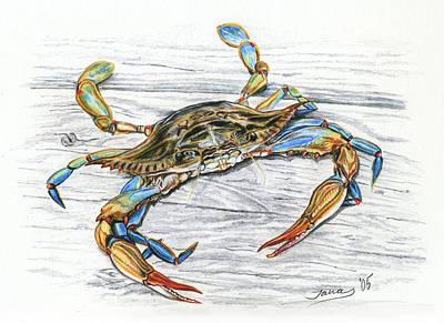 Shells Drawing - Blue Crab by Jana Goode