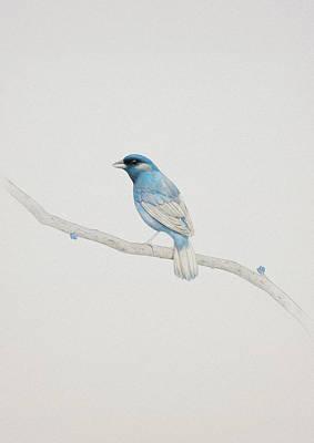 Branches Digital Art - Blue by Diego Fernandez