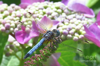 Dragonfly Photograph - Blue Dragonfly On Flower by Scott Cameron