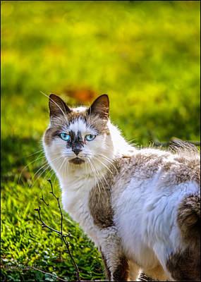 Kitty Photograph - Blue Eyes Cat by LeeAnn McLaneGoetz McLaneGoetzStudioLLCcom