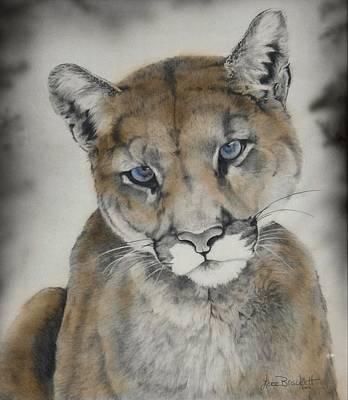 Panther Drawing - Blue Eyes by Lori Brackett