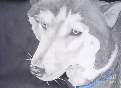 Siberian Husky Drawing - Blue Eyes by Sarah Quezada
