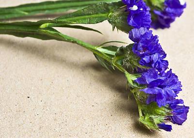 Blue Flower Print by Svetlana Sewell