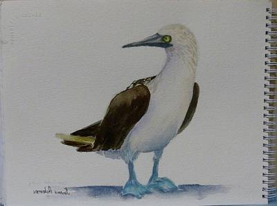 Boobies Painting - Blue Footed Boobie by Yvonne Ankerman