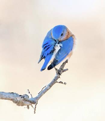 Bluebird Digital Art - Blue Grace by Betty LaRue