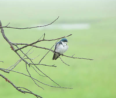 Photograph - Blue Headed Bird by Randi Shenkman