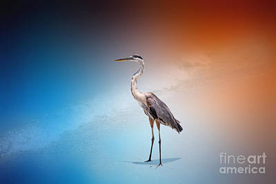 Decor Photograph - Blue Heron 46 By Darrell Hutto by J Darrell Hutto
