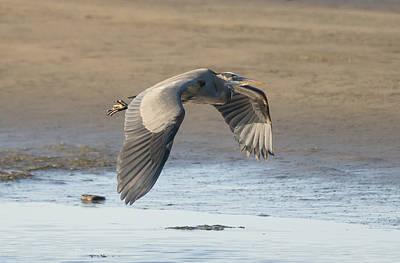 Oregon Photograph - Blue Heron At Low Tide by Loree Johnson