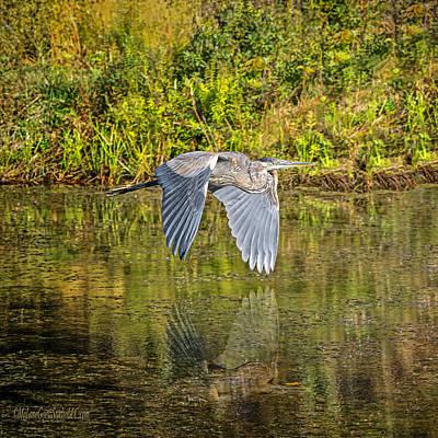 Fern Photograph - Blue Heron In Flight by LeeAnn McLaneGoetz McLaneGoetzStudioLLCcom